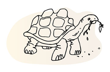 Turtle chewing illustration