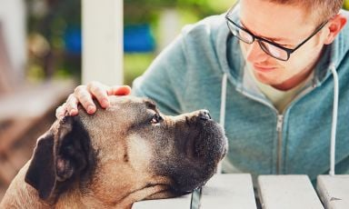 Closeup of dog resting chin on outdoor wood plank table with tired eyes, owner petting the dog as he looks into the dog's eyes