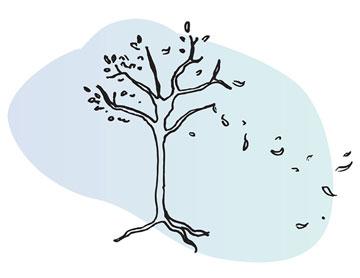Tree shedding leaves illustration